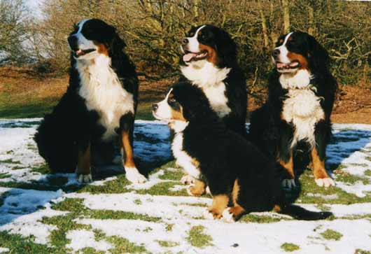 Bailey, Bess, Susie & Remy